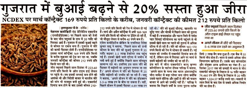 Cumin 20% cheaper to increase sowing in Gujarat