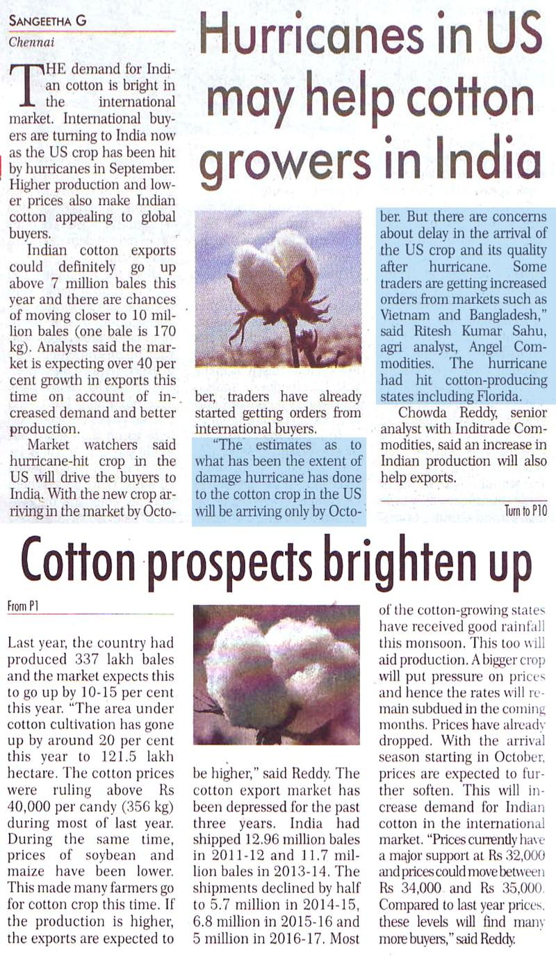 Hurricanes in US may help cottongrowers in India